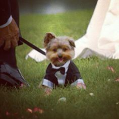 Seriously your dogs belong in your ceremony #wedding #groom #dog #summer