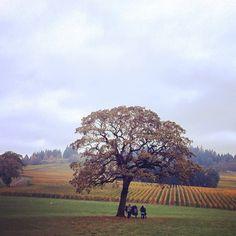 Stoller Vineyard