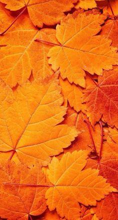 ⭐ autumn leaves