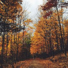 almightynature:  More nature photos at...