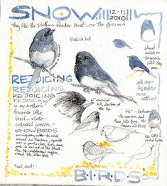 by Kate Johnson. Nature, journal, sketchbook, notebook, dairy, words and images, drawing.