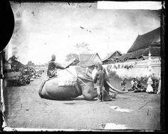 1866-elephant-de-guerre