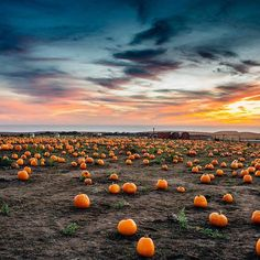 If we were going to pick our own pumpkins for the first time, we go to a pumpkin patch with a sea view! ✌️️😉 Had such a beautiful and fun day at Half Moon Bay (California) yesterday and picked up a couple of jack-o'-lantern pumpkins. Time to carve some scary faces. 🎃🔪