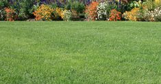garden care schedule garden care schedule Want a thick and healthy lawn Ironite is your secret weapon for creating vibrant green growth. Lawn Care Schedule, Lawn Care Tips, Landscaping Retaining Walls, Backyard Landscaping, Best Grass Seed, Care Calendar, Lawn Fertilizer, Outdoor Garden Lighting, Lawn Service