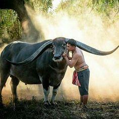 Wowww amazing | Photo by ©Visoot Uthairam #wildlifeowners