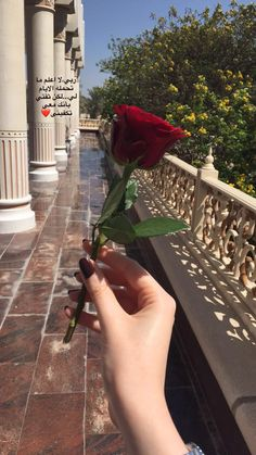 Travel Beautiful Arabic Words, Arabic Love Quotes, Cute Girl Photo, Girl Photo Poses, Beautiful Roses, Beautiful Hands, Beautiful Places, Love Couple Images, Girls Hand