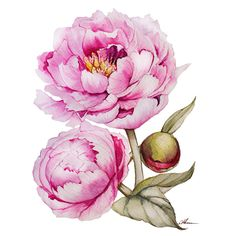 Flower Painting Discover Blooming garden Blooming garden on Behance Peony Drawing, Peony Painting, Watercolor Flowers, Watercolor Paintings, Watercolors, Botanical Drawings, Botanical Prints, Art Floral, Illustration Blume