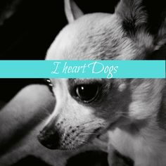 I heart Dogs is everything you love about your fur baby. Homemade treats, dog fashion, cute dog photos and more.
