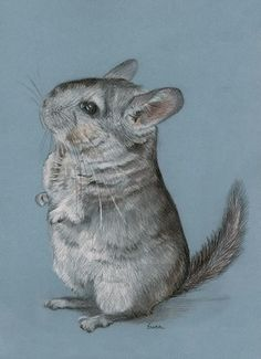 Chinchilla Drawing---amazing!!  thought it was a photo! I really like chinchillas so I may attempt this.