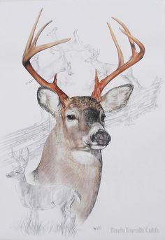 Drawing of deer.