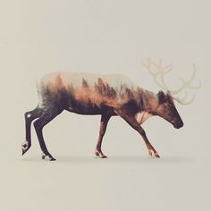 Norwegian artist Andreas Lie has created a beautiful photo series that combines together the beauty of Scandinavian nature with the dignity of the residing wildlife through the use of double exposure photography