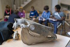 Muséum des Sciences Naturelles à Angers