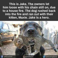 💕💕💕 Jake & Maxie 💕💕💕