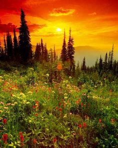 First Light (F1 Online) - Außenaufnahme, Botanik, Pflanze, Blume, Wildblume - Fotoprints