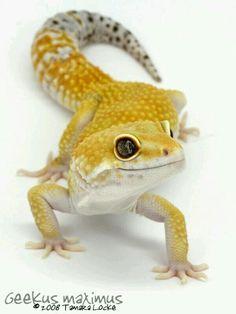 Fricken cutest things ever! Love their big eyes!