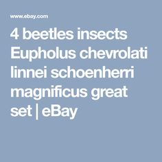 4 beetles insects Eupholus chevrolati linnei schoenherri magnificus great set   eBay