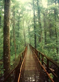 Wooden walkway through the trees.