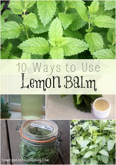 10 Ways to Use Lemon Balm - Homespun Seasonal Living