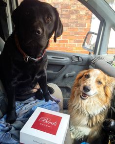 In that box is a selection of cream cakes and pastries for the family ... Look how well the box is being guarded by these 2.  by labradors4life