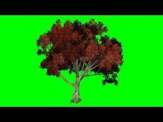 Green Screen Video -Tree Green Screen Color - YouTube Green Screen Images, Free Green Screen, Durga Images, New Background Images, Montage, Youtube, Color, Colour, Youtubers