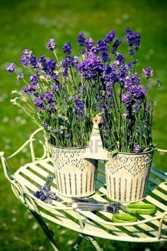 Lavender flowers in pretty metal container
