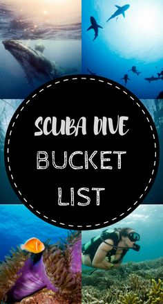 Spectacular Dive Sites You Have to See to Believe Take a look at these places you HAVE to dive before you die!