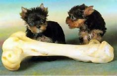 Ok, I think this bone will be enough for lunch. For dinner need to find another.