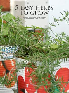 Get tips for growing herbs, the 5 easiest herbs to grow