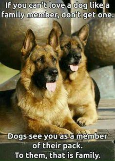 680 Best German Shepherd Quotes Images On Pinterest German