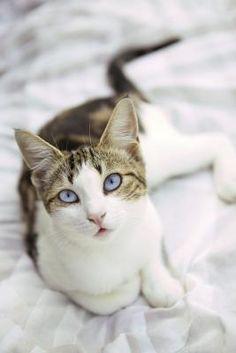 Cómo usar bicarbonato de sodio para deshacerse de las pulgas de los gatos