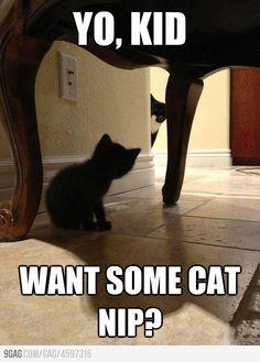 Drug Dealer Cat