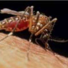 #Pesquisa indica que El Niño contribuiu para epidemia de zika na América do Sul - Terra Brasil: Terra Brasil Pesquisa indica que El Niño…