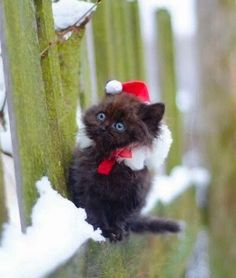 It's the first time this little kitten has seen snow! I think he likes it!