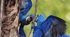 A exposição conta com imagens do Pantanal Matogrossense