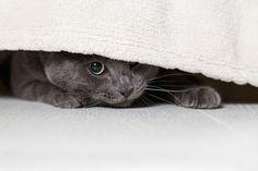 Ängstliche Katze? – 8 Tipps wie du einer scheuen Katze die Angst nehmen kannst