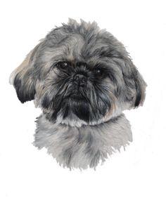 Shih Tzu - Pastels on bristol board Tiffany Landale - bespoke portraiture - www.foxkay.co.uk Bristol Board, Shih Tzu, Pastels, Bespoke, Tiffany, Dogs, Animals, Taylormade, Animales