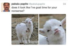 Ain't nobody goat time for that!!! #humor