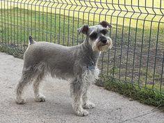Dogs, Animals, Pets, Animales, Animaux, Doggies, Animal, Pet Dogs, Animais