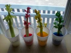 Fun Classroom Activities and Experiments to Interest Children / Kids in Growing Plants Express ideas and share observations with Engage in a scientific experiment with a peer or with small groups of children using sharing/turn taking skills. Fun Classroom Activities, Science Classroom, Science Education, Science Activities, Science Projects, Environmental Education, Preschool Colors, Preschool Crafts, Teaching Colors
