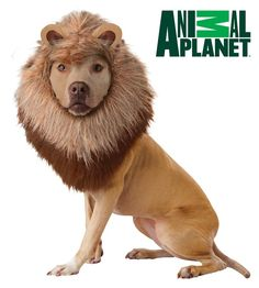Pin for Later: This Year's Top 10 Dog Halloween Costumes Lion Animal Planet lion ($11 and up)