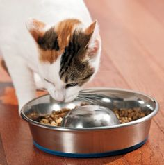DuraPet™ Slow-Feed Bowls - Slow-feed cat bowl slows down your cat's eating or drinking  * Ideal for overweight cats or cats that throw up after eating too quickly  * Bowls are dishwasher safe and stainless steel construction resists bacteria growth