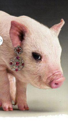 Cerdos & diamantes