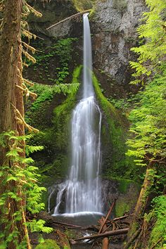 Marymere Falls In Olympic National Park by Pierre Leclerc Photography