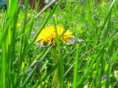 Ich finde einen Naturgarten unglaublich schön. Er ist wild und urig. Und welcher Gartentyp sind Sie? http://www.experto.de/b2c/hobby-freizeit/haus-garten/garten/gartengestaltung-welcher-gartentyp-sind-sie.html