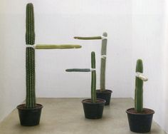 Les 4 Nature calls Allora & Calzadilla growth, 2006