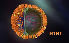 1. Swine Flu - H1N1 - Haemaglutinin (orange) and neuraminidase (yellow) are the 2 coat proteins, ion channels are also shown and 8 strands of RNA inside.