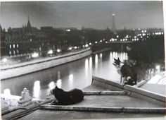 fewthistle:  Paris Cats at Night. 1954 Photographer: Robert Doisneau