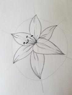 Lily Step 8
