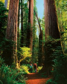 Mariposa Grove and Muir Woods to see the giant sequoias.