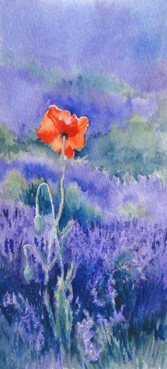 Poppy in the Lavender - watercolour by Tessa Spanton
